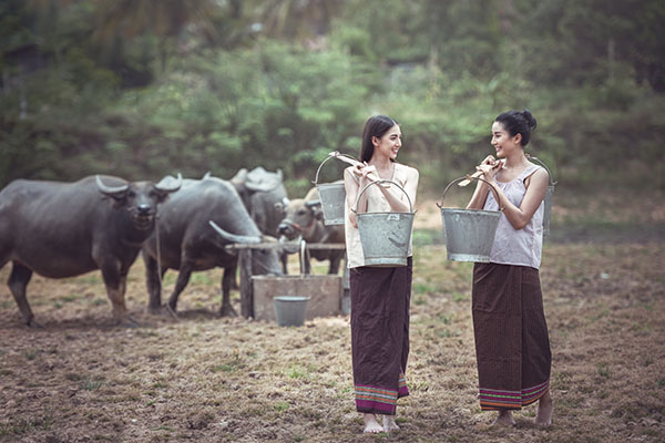 Thai traditional culture with buffalo, Thailand